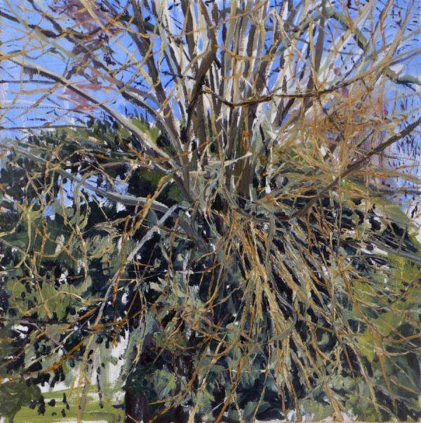 tree 50 x 50 cm Öl auf Lwd. 2010