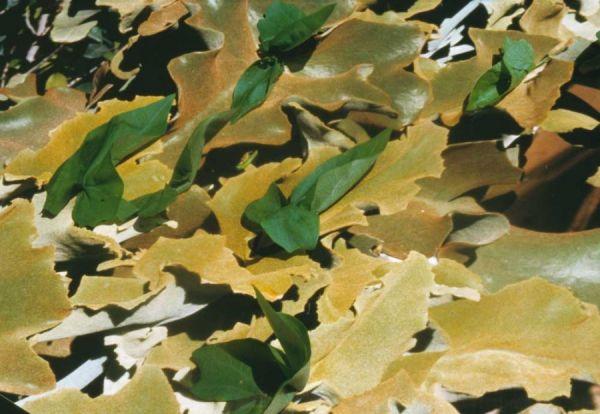 Cuernavaca/Freiburg digital print auf Folie  2002/05